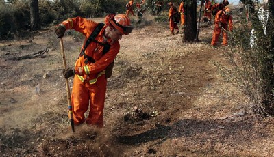 An inmate cleans out brush to build a fire line for structure protection from the Ponderosa Fire near Paynes Creek, Calif., Wednesday, Aug. 22, 2012. The Ponderosa Fire, which has scorc