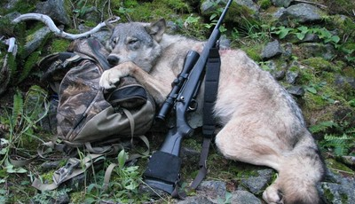 This Sept. 1, 2009 file photo provided by Robert Millage shows his rifle with a wolf he shot on the first day of wolf hunting season along the Lochsa River in Northern Idaho. A temporar