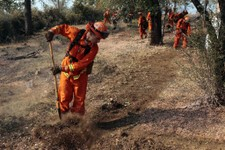-                An inmate cleans out brush to build a fire line for structure protection from the Ponderosa Fire near Paynes Creek, Calif., Wednesday, Aug. 22, 2012. The Ponderosa Fire, which has scorc