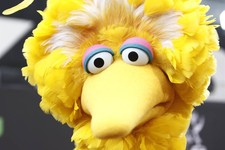 -                FILE - In this Aug. 30, 2009 file photo, Big Bird arrives at the Daytime Emmy Awards in Los Angeles.  What do a Navy mom, Big Bird and AARP have in common? They all want President Barac