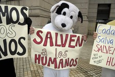 "-                Pro-life demonstrators dressed in animal costumes holding protest signs that read in Spanish; ""Save the humans,"" perform in front of the Uruguayan Congress in Montevideo, Uruguay, Wedne"