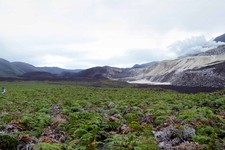 -                In this May 2013 photo provided by Google, Daniel Orellana of the Charles Darwin Foundation is shown crossing a field of ferns to reach some naturallyoccurring sulfur mines on the top