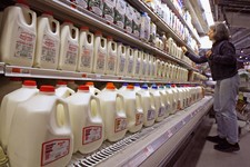 -                FILE - This Feb. 11, 2009 file photo shows a shopper looking over the milk aisle at the Hunger Mountain Co-op in Montpelier, Vt. Approval of a massive farm bill _ and the cost of a gall