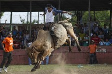 -                In this July 27, 2013 photo, a man rides a bull during events celebrating Santa Ana, or Saint Anne, the mother of the Virgin Mary, in Nandaime, Nicaragua. Men careen through town with c