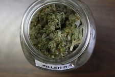 California To Vote On Legalizing Marijuana In November