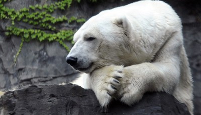 Fiat-Chrysler CEO Begs America to Kill More Polar Bears, or Something