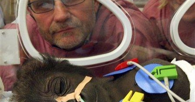 Gorillas in the Nursery