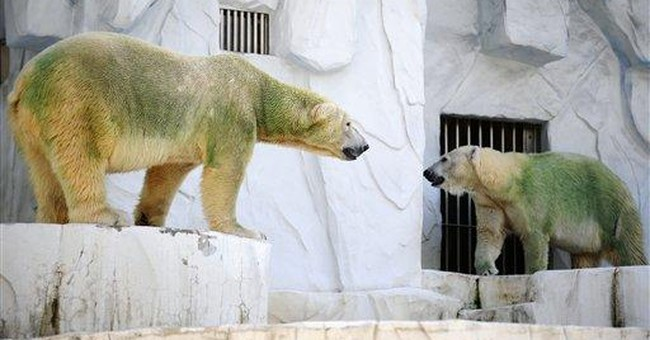 USGS: Some Alaska polar bears losing their fur