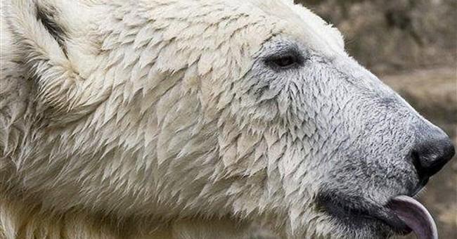 Polar Bear BS