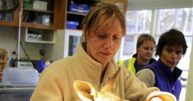 Health Reform, Veterinary-Style