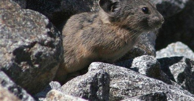 Critters moving away from global warming faster