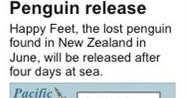 New Zealand's penguin visitor starts journey home