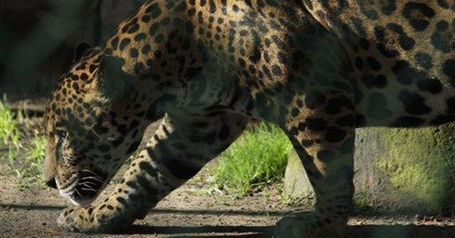 Captured drug kingpin pets strain Mexico's zoos