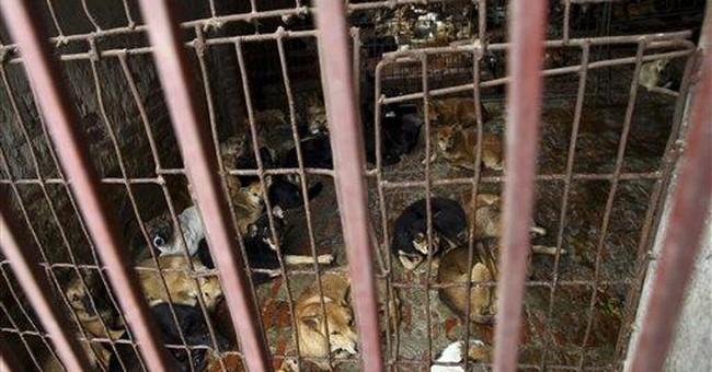 Dognappers spark deadly violence across Vietnam