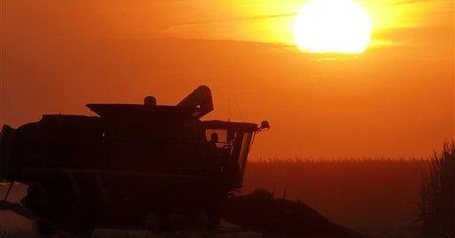 Bigger corn surplus could slow food inflation