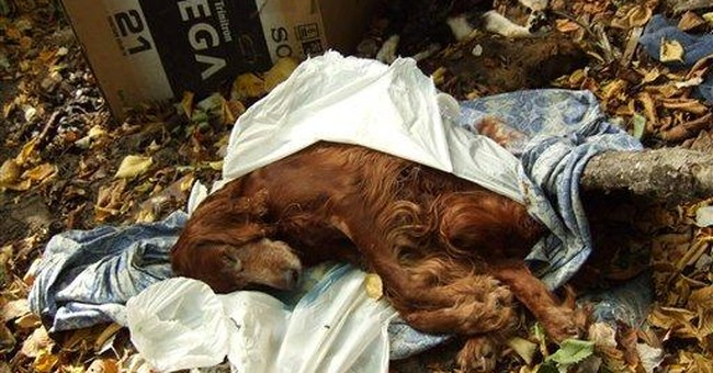 AP Enterprise: Ukraine accused of dog slaughter