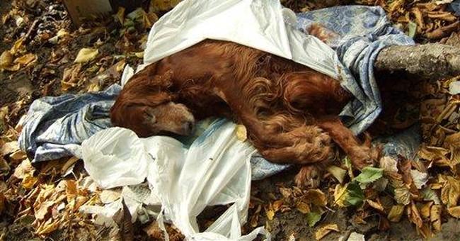 AP Enterprise: Ukraine accused of dog slaughter