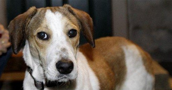 Dog survived gas chamber, up for adoption in NJ