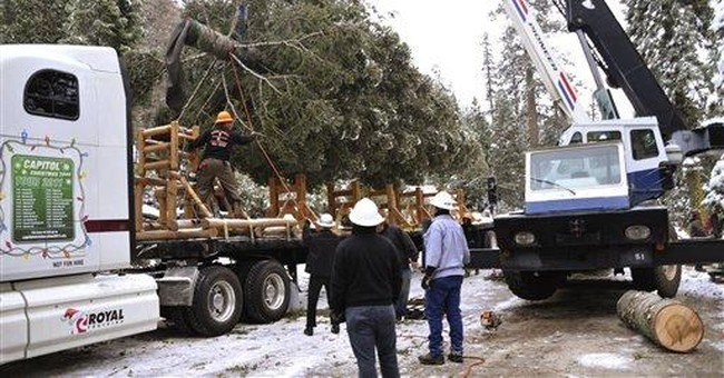 Christmas tree for US Capitol on way from Calif.