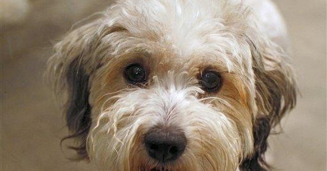 Where did Fido come from? Gifts, strays lead list
