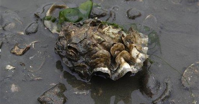 Study blames ocean CO2 for oyster declines