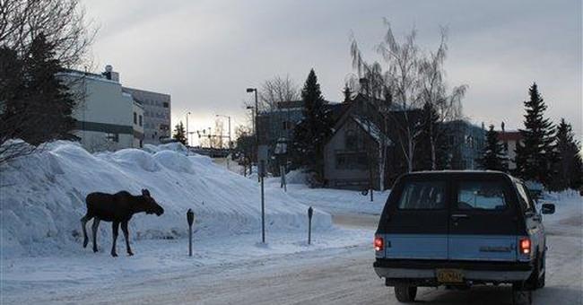 Winter hasn't loosened grip for Alaska moose