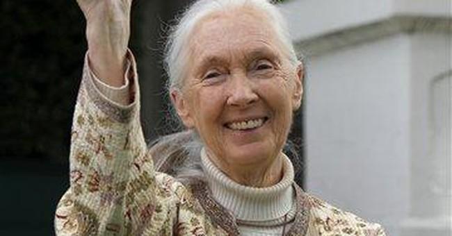 Jane Goodall named grand marshal of Rose Parade