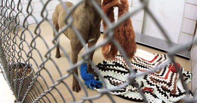 Dog that was spared the death penalty is released