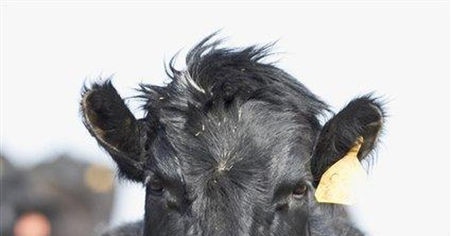 Quick response averts market scare in mad cow case
