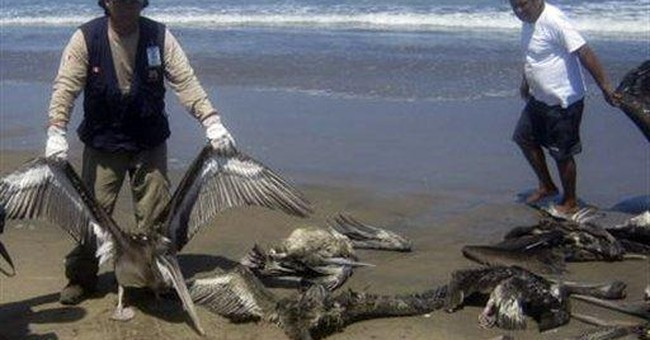 Autopsy delay clouds Peru dolphin die-off mystery