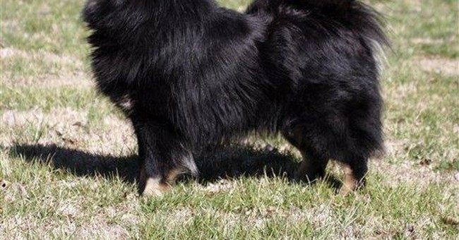 Westminster introduces 6 new breeds to competition