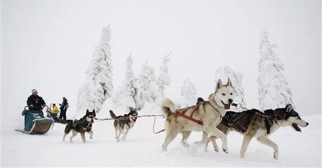 Tough dog sled race under way in Czech Republic
