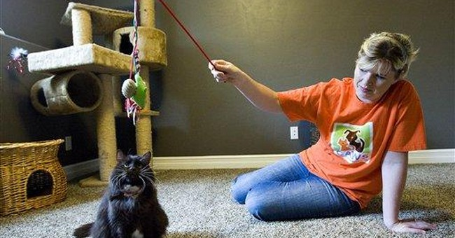 Cat survives 2 euthanasia attempts at Utah shelter
