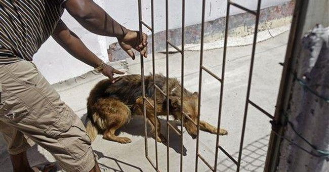 Welfare group helps South African township dogs