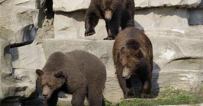 Orphaned Alaskan bear cubs make Detroit Zoo debut