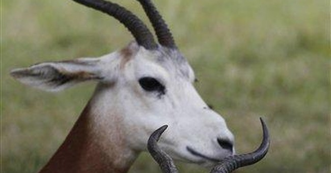 Rule restricts hunting of rare exotic antelopes