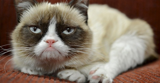 Cheer up, Grumpy Cat: You have an endorsement deal