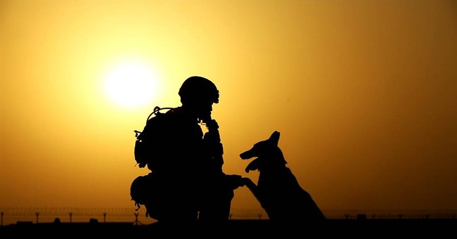 TV special shows glory, trauma of military dogs