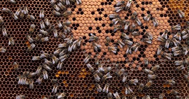 A Bee in Their Bonnet