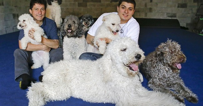Performing dogs go big after $1 million TV prize