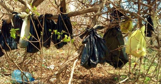 Dead cats found hanging in NYC suburb were beaten