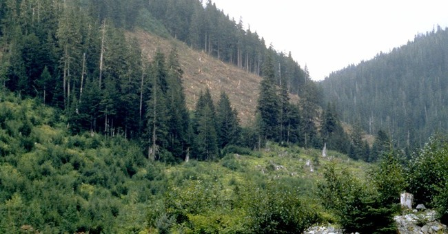 Scientists ask Obama to protect old growth forest