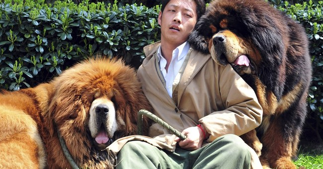 Chinese breeder sells 2 Tibetan mastiffs for $3M