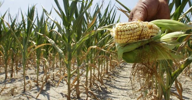 An Iowa Farmer's Response to Chuck Norris