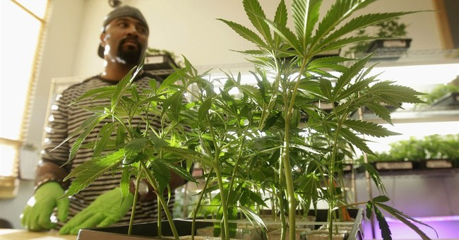 Will Marijuana Ballot Measures Increase Voter Turnout in 2014?
