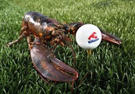 Bipartisan Group of Senators Calling for National Lobster Day