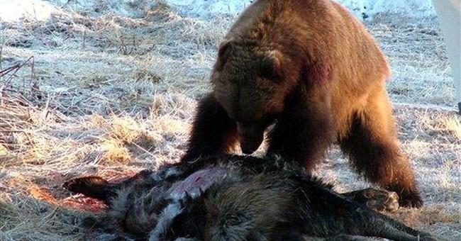 2 Alaska girls injured by stampeding moose