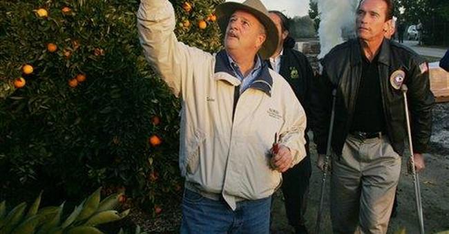 Big Orange CEOs Under Fire in Congress