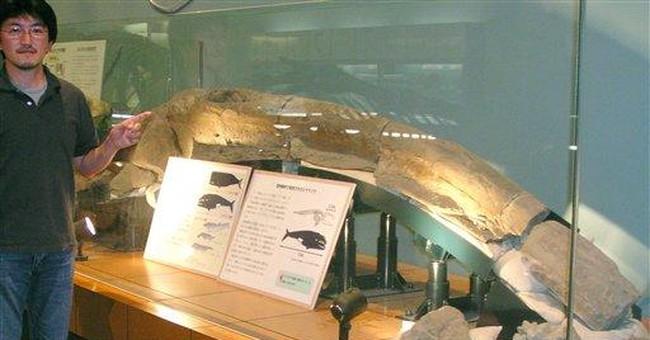 Heavy rains yield big dinosaur fossil find in Md.