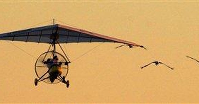 Whooping cranes guided by plane to stay in Ala.